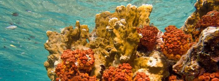 la reserve cousteau en guadeloupe